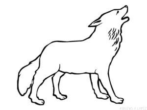 imagenes de lobos solitarios