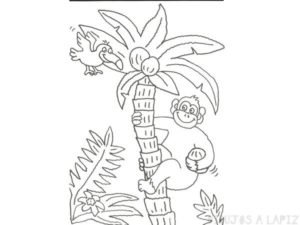 imagenes de monos para dibujar