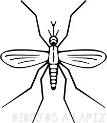 imagenes de mosquitos animados