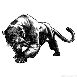 imagenes de pantera negra