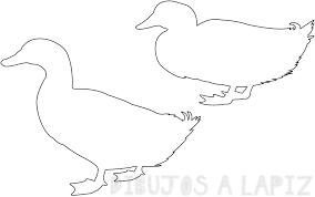 imagenes de patitos