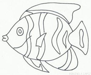 imagenes de peces para colorear