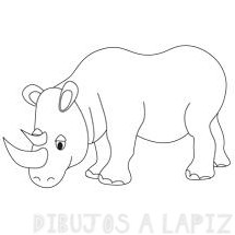 imagenes de rinocerontes bebes