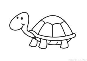 imagenes de tortugas para dibujar