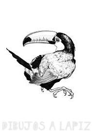 imagenes de tucanes para dibujar
