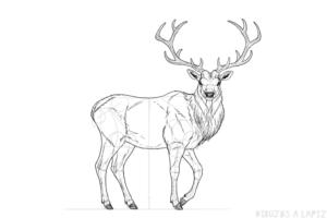 imagenes de un ciervo animal