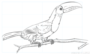 imagenes de un tucan para dibujar