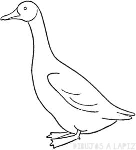 imagenes del vuelo de los gansos