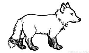 imagenes del zorro