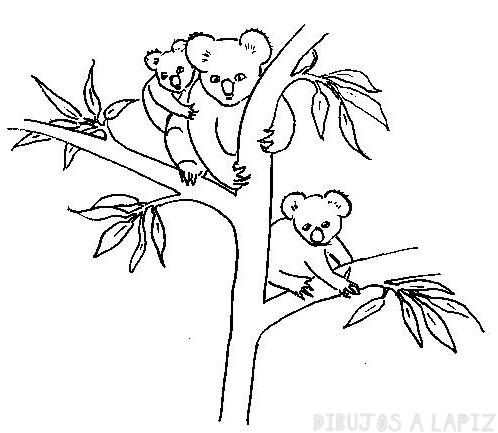 imagenes koalas animados