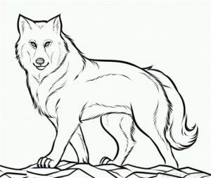 imajenes de lobos