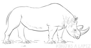 imajenes de rinoserontes