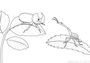 insectos caricatura