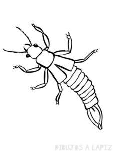 insectos para imprimir