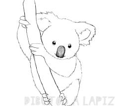 koala dibujo a lapiz
