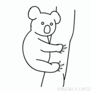 koala imagenes