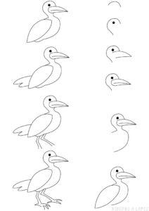 las gaviotas imagenes