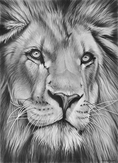 leon dibujo