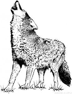 lobo para pintar