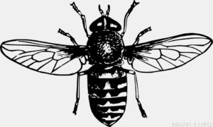 mosca animado