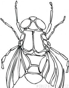 mosca dibujo infantil