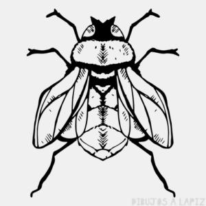 moscas animadas
