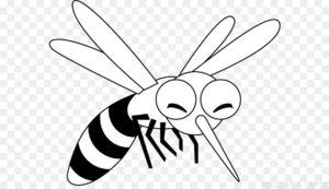 mosquito dengue imagen