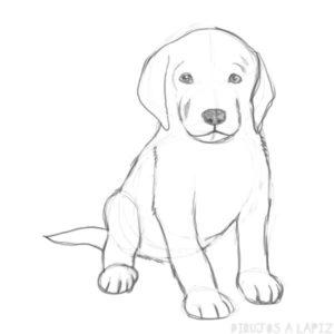 patrulla de cachorros dibujos