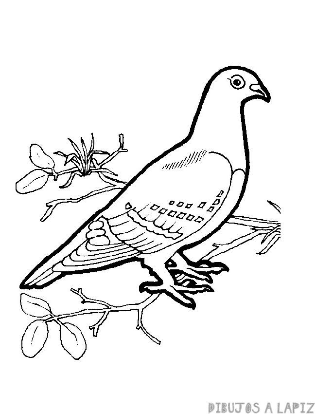 pintada ave