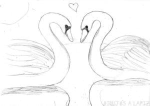 pintar cisnes