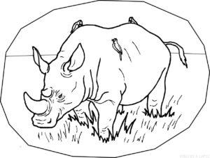 rinoceronte para dibujar