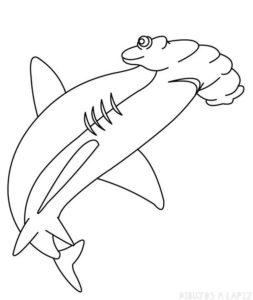 tiburon martillo dibujo