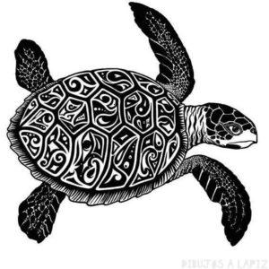 tortuga caricatura