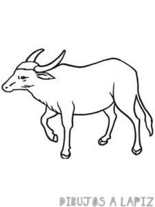 un dibujo de un toro
