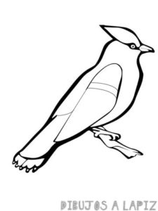 waxwing bird coloring page