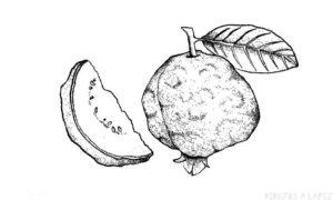 imagenes de dulce de guayaba