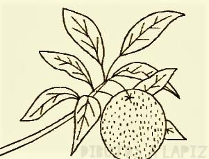 arbol de mandarina