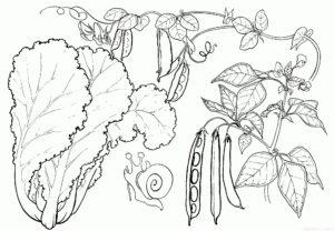 como dibujar frutas y verduras scaled