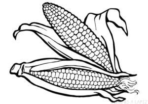 como dibujar una mazorca de maiz
