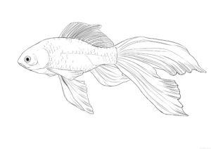 como se dibuja un pescado scaled