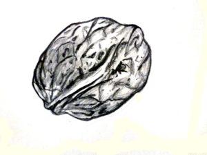 frutos secos dibujos para colorear scaled