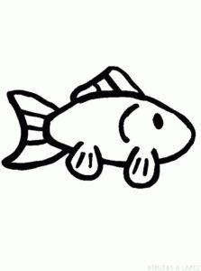 pescado imagen