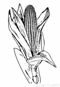 planta de maiz para dibujar