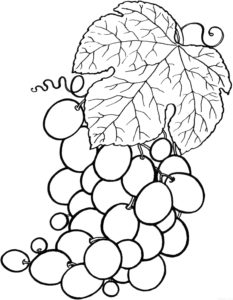 racimos de uvas para imprimir scaled