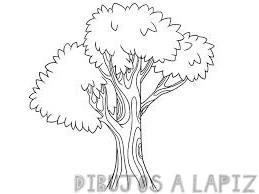 arbol de la vida dibujo
