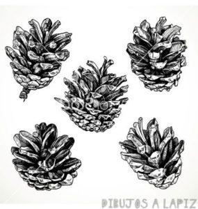 arbol pino dibujo