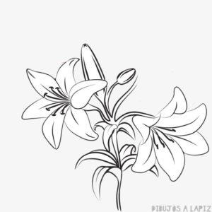 azucenas blancas fotos