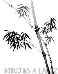 bambu fotografia