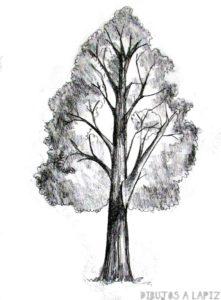 como dibujar un tronco de arbol