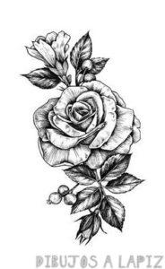 como dibujar una rosa en 3d